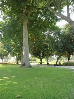 Creek Park