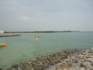 Mangrove area or Mangal