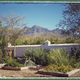 Babylonstoren: Healing Garden