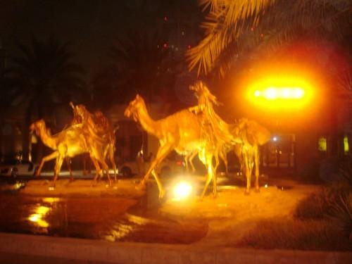 gold camels